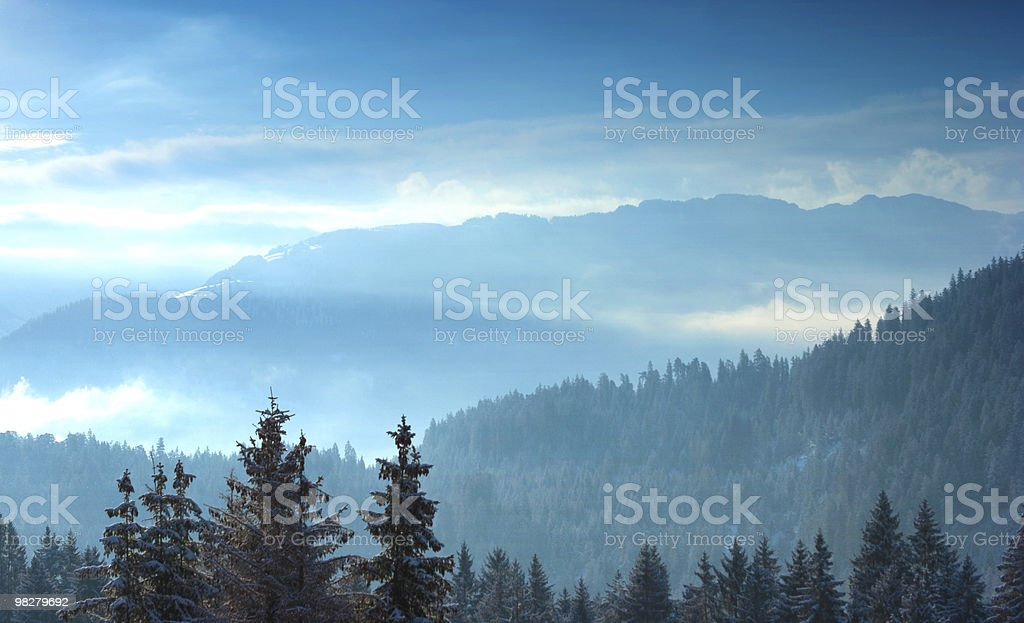 Alpine trees with snow at sunrise royalty-free stock photo