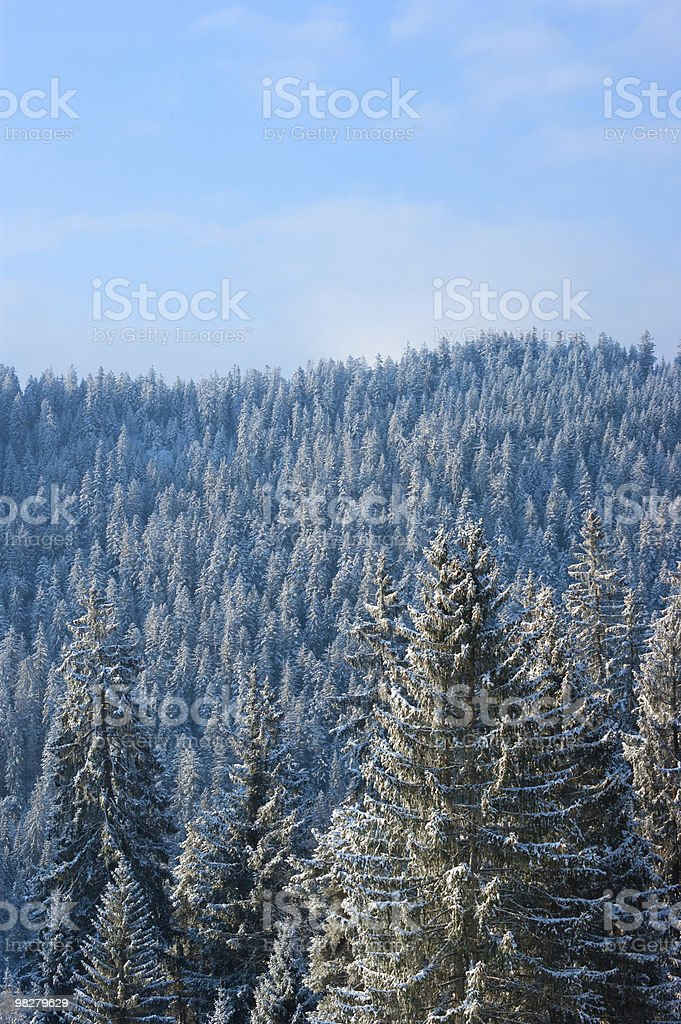 Alpine trees with snow royalty-free stock photo