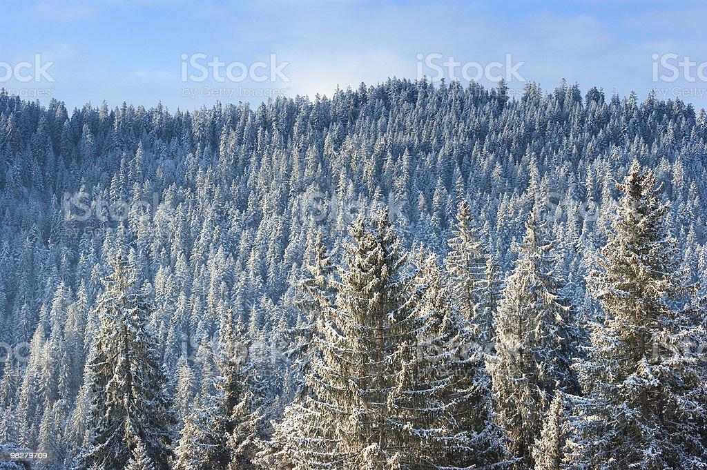 Alberi alpini con neve foto stock royalty-free