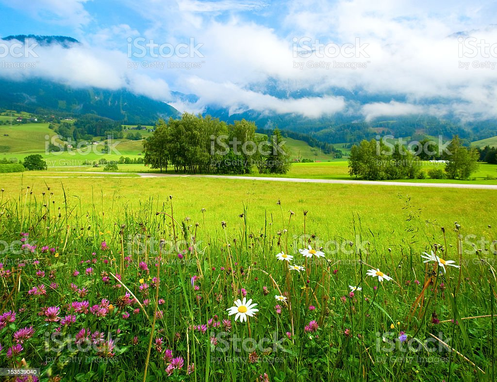 Alps meadow summer view royalty-free stock photo
