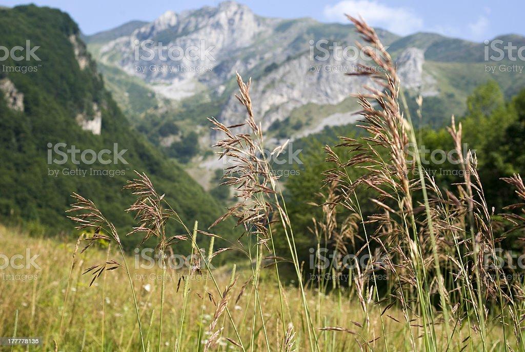 Alps-Maritimes, France royalty-free stock photo