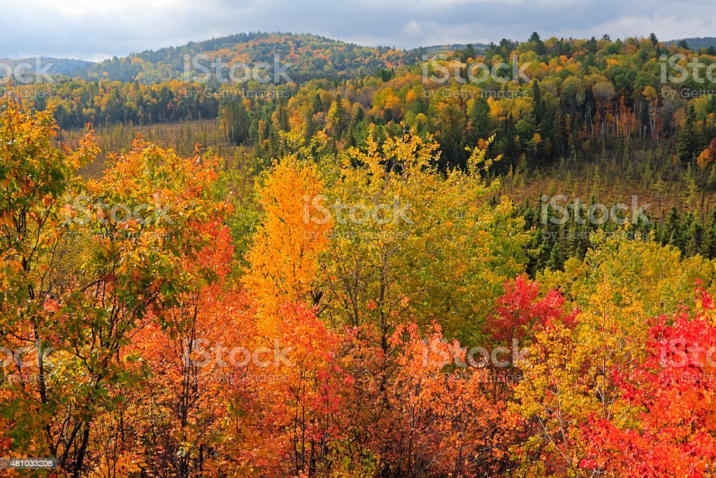Alqonguin Park Hardwood Lookout Trail stock photo