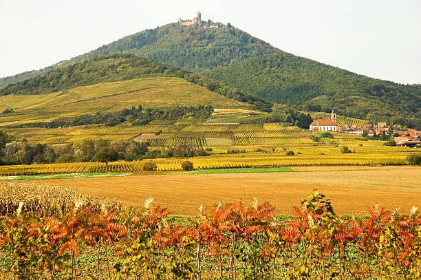 Alsace landscape stock photo