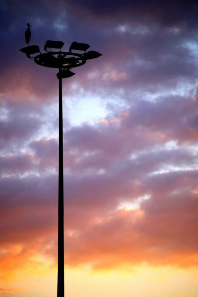 Alsace Storch auf Beleuchtung – Foto