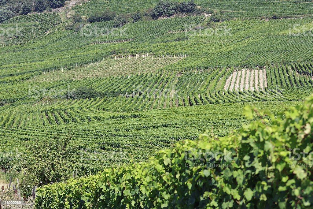 Alsace - Vineyards near Saint Hippolyte royalty-free stock photo