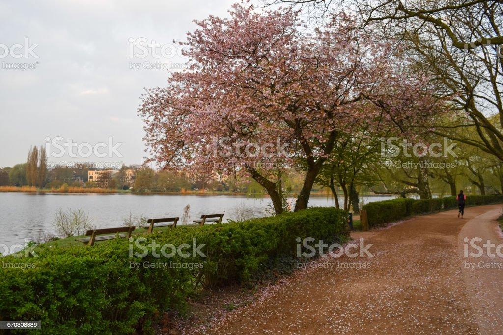 Alster lake and Alsterpark at foggy morning. Hamburg City main park. Nature of Northern Germany. Europe stock photo
