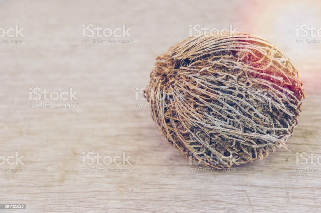 Alstonia seed on hardwood floor royalty-free stock photo