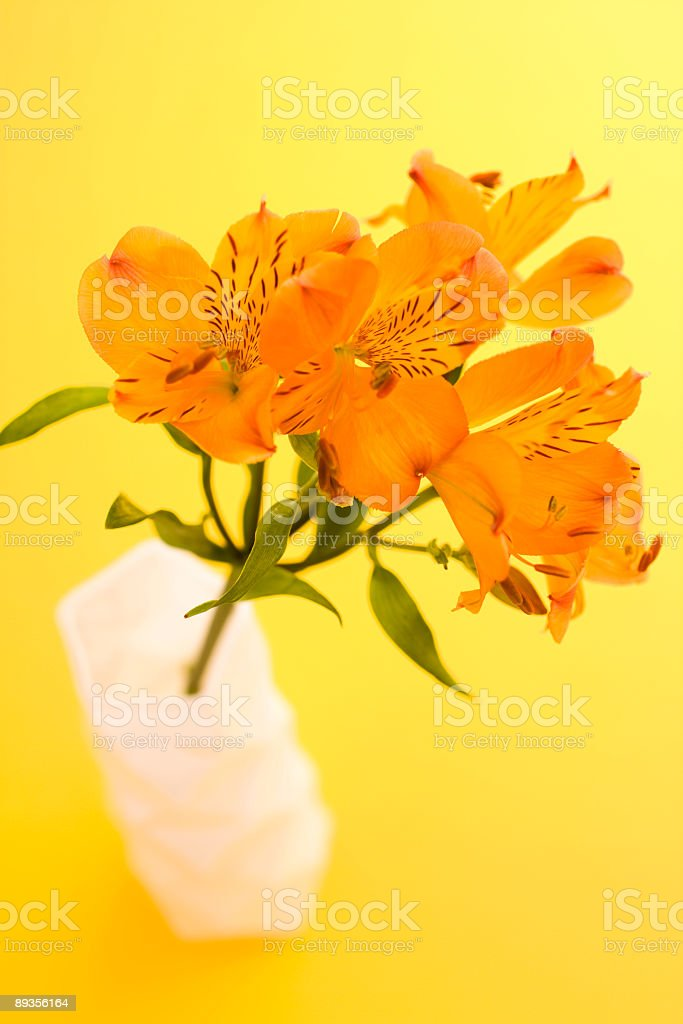 Alstroemeria flowers in vase royalty free stockfoto
