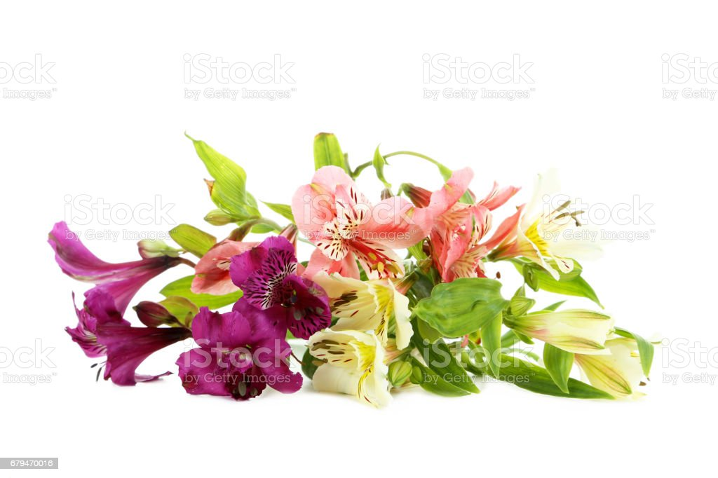 Alstroemeria flowers isolated on a white background 免版稅 stock photo