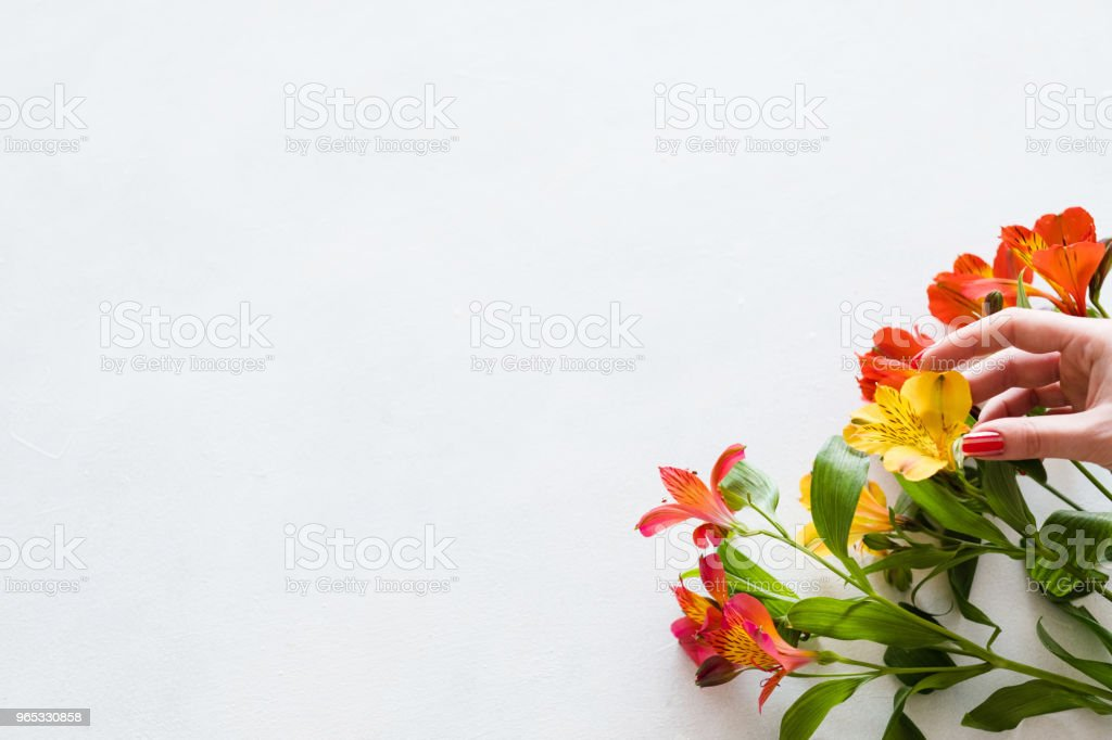 alstroemeria white background floral bouquet royalty-free stock photo