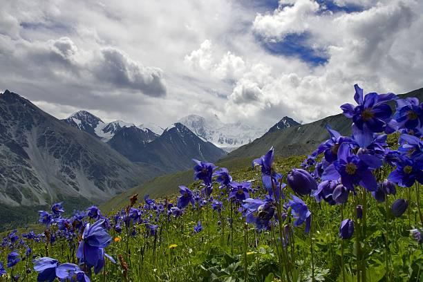 motywy ałtaj - państwowy rezerwat przyrody altay zdjęcia i obrazy z banku zdjęć