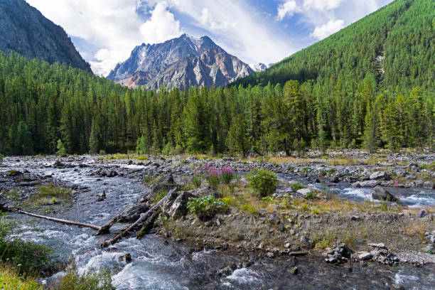 altai mountains. the shawla river. siberia, russia. - altai nature reserve стоковые фото и изображения