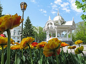 Sumy, Ukraine - April 28, 2019: Altanka is a symbol of Sumy against of yellow terry tulips in a spring sunny day. Amazing cityscape with flowers, young greens and historical monument of architecture