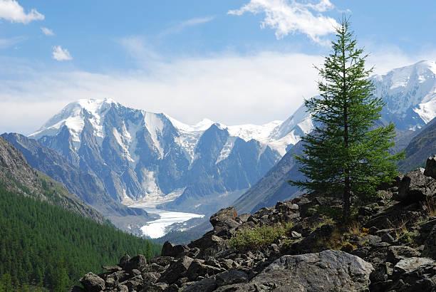 altay - państwowy rezerwat przyrody altay zdjęcia i obrazy z banku zdjęć