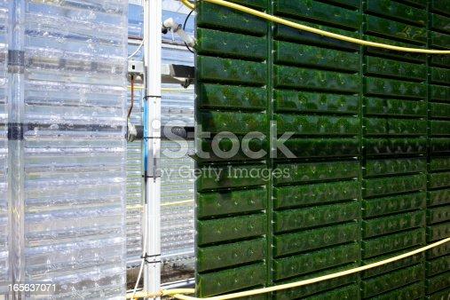 istock Alternative Energy: production of micro algae for regenerative power supply. 165637071