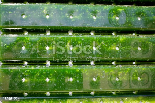 istock Alternative Energy: production of micro algae for regenerative power supply. 165961224