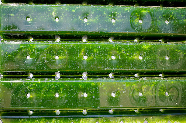 Alternative Energy: production of micro algae for regenerative power supply. production of micro masses for regenerative power supply. biofuel stock pictures, royalty-free photos & images