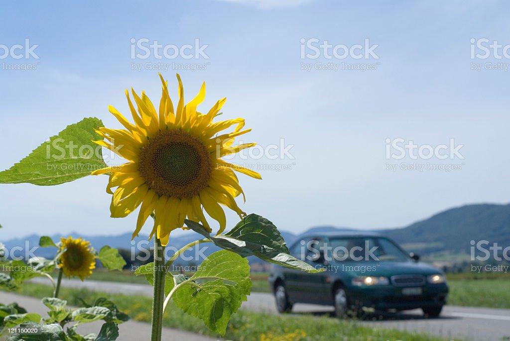 Alternative Fuel? royalty-free stock photo