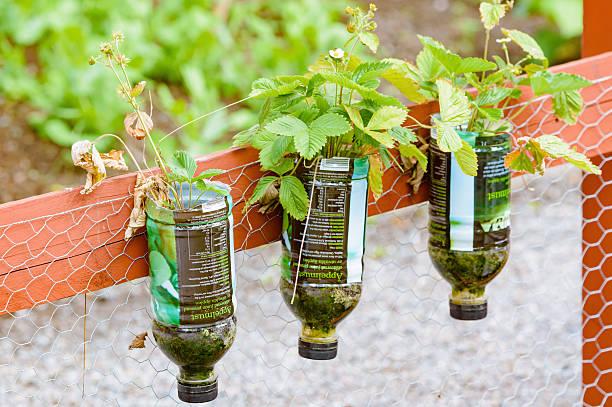 alternative gardening - pet bottles bildbanksfoton och bilder
