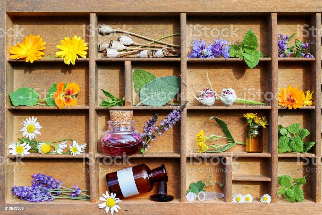 薬用植物と代替医療 ストックフォト