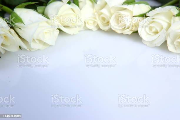 Although the stems of roses are always socalled they are one of the picture id1145914988?b=1&k=6&m=1145914988&s=612x612&h=cnxkq9kcqgkgc1kecq5ksonsnjosugtlrxgqbeviqe8=