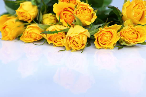 Although the stems of roses are always socalled they are one of the picture id1151590668?b=1&k=6&m=1151590668&s=612x612&w=0&h=mmwrzbfs  ktwllkwv7duvd16atyl0r2a wxangtwx0=