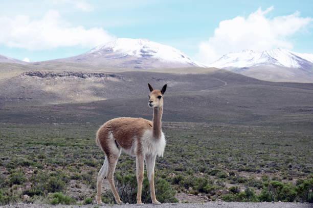 Altiplano Landscape stock photo