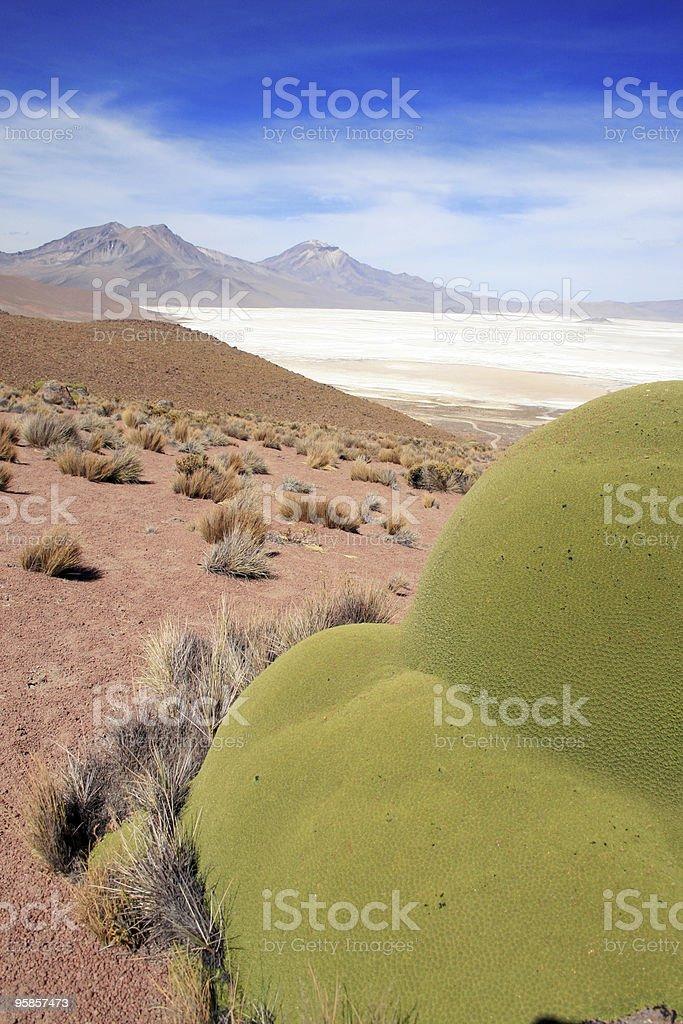 Altiplano Salt lake in Chile-Porträt – Foto