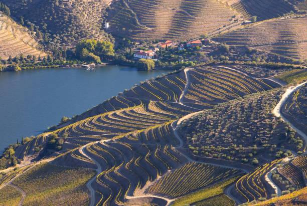 Alto Douro vinhateiro vineyards scenic landscape during harvesting season (vindima) - UNESCO World Heritage Alto Douro vinhateiro vineyards scenic landscape during harvesting season (vindima) - UNESCO World Heritage duero stock pictures, royalty-free photos & images