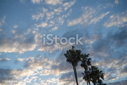 Altocumulus cloud and palm trees in a row
