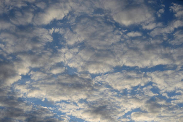 Altocumulus clouds at sunset. Altocumulus clouds at sunset, can be used as background. altocumulus stock pictures, royalty-free photos & images