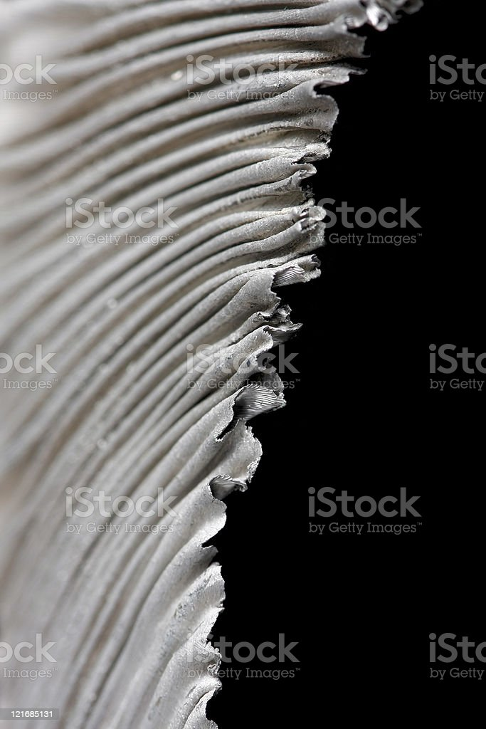 aluminum swarf royalty-free stock photo