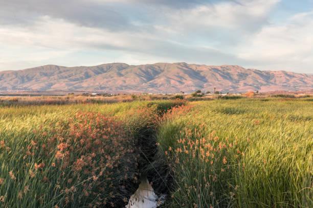 Alviso Wetlands and Diablo Mountain Range Alviso Marina County Park, Santa Clara County, California, USA. san francisco bay stock pictures, royalty-free photos & images