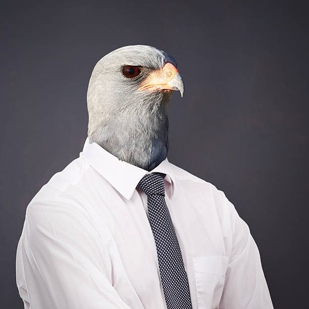 always stay on top of the business food chain - hawk bird stock photos and pictures