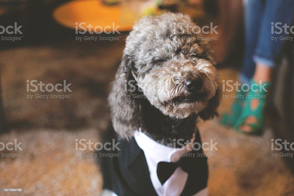 I am groom! stock photo