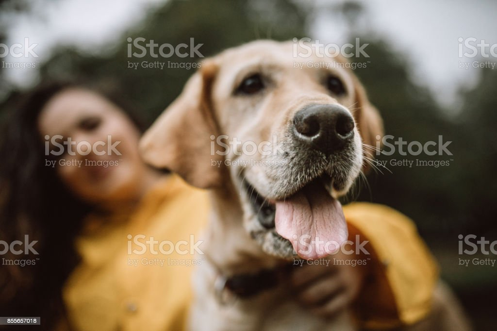 I am the happiest dog in the world stock photo