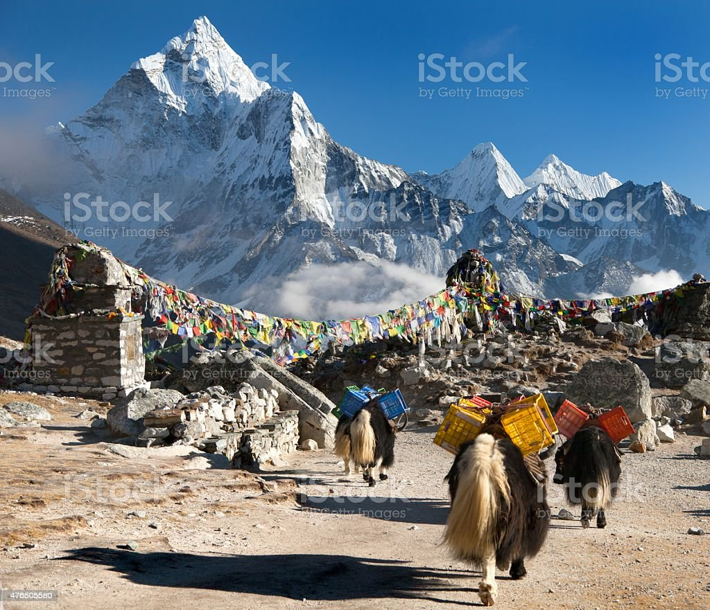 Ama Dablam with caravan of yaks and prayer flags stock photo