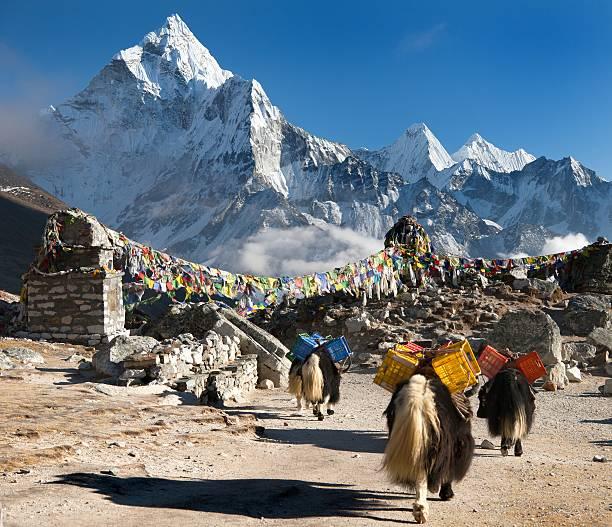 berg ama dablam mit caravan von yaks und gebete flags - nepal tibet stock-fotos und bilder
