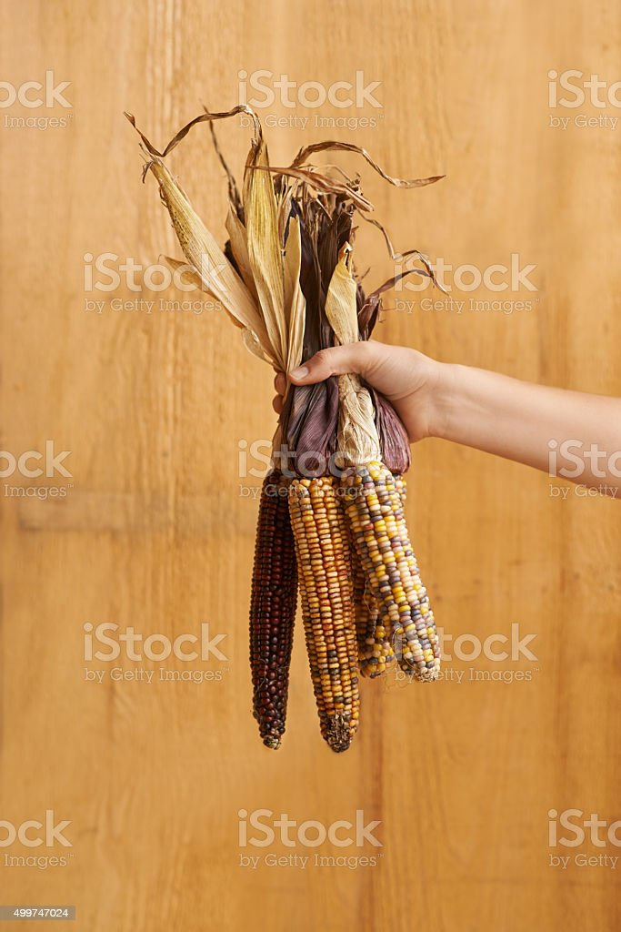 A-maize-ing stock photo