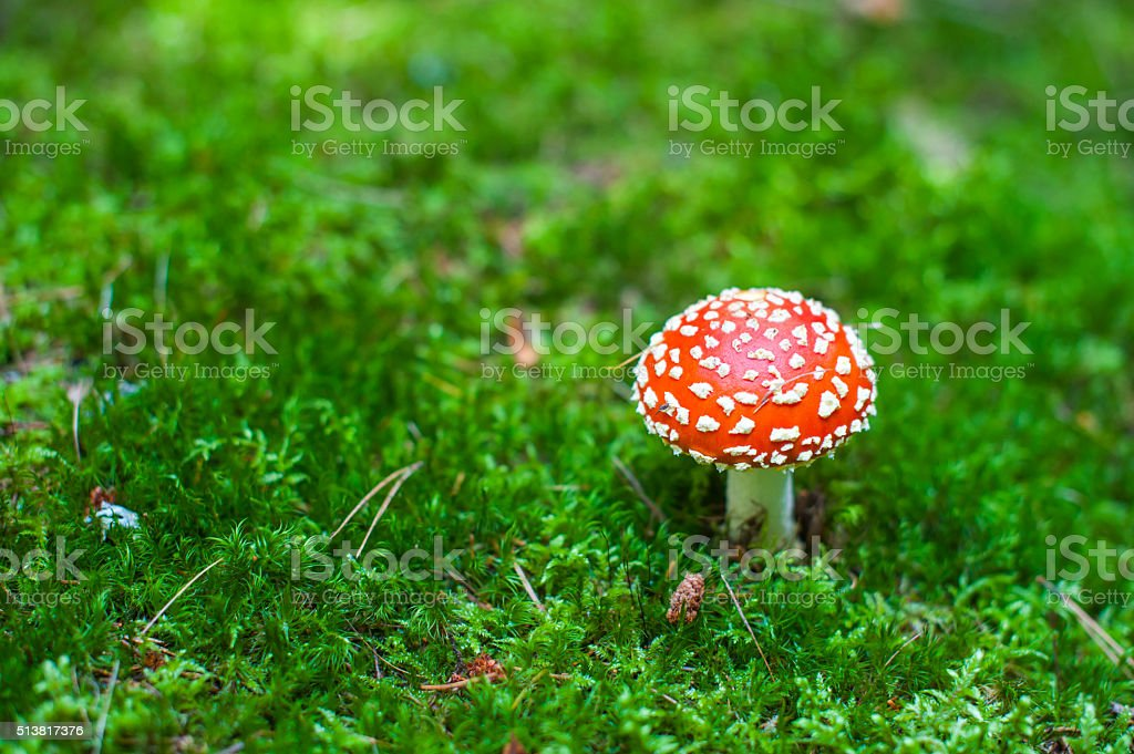 Amanita from above stock photo