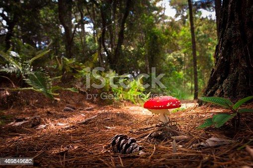 istock Amanita muscaria mushroom 469849682