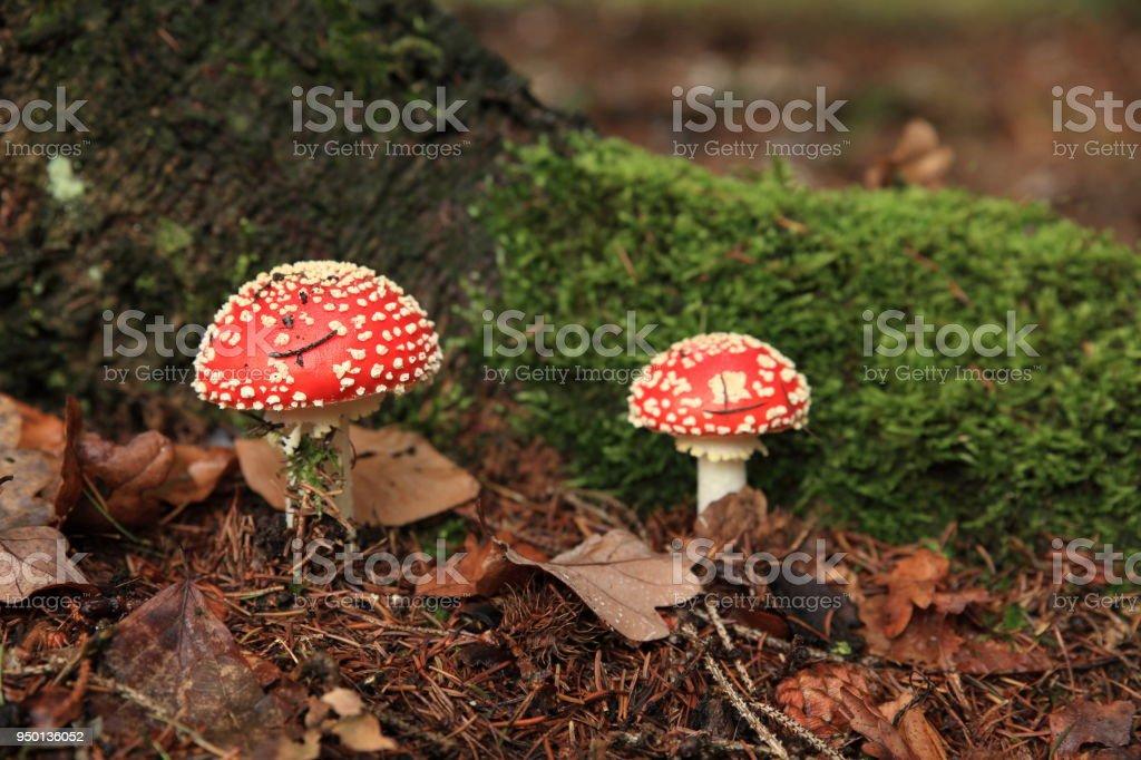 Amanita Muscaria, poisonous mushroom Germany stock photo