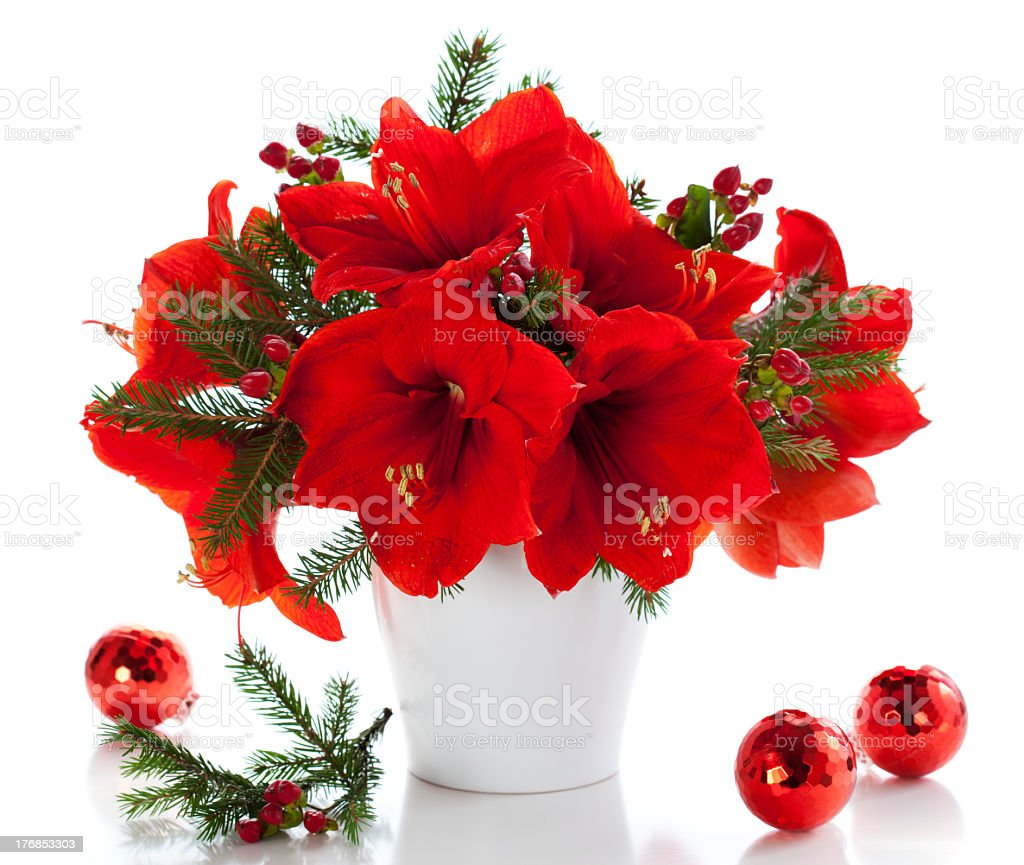 Amaryllis in full blossom decorated by Christmas baubles stock photo