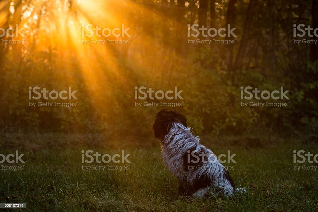 Amazed and contemplative look into the sun stock photo