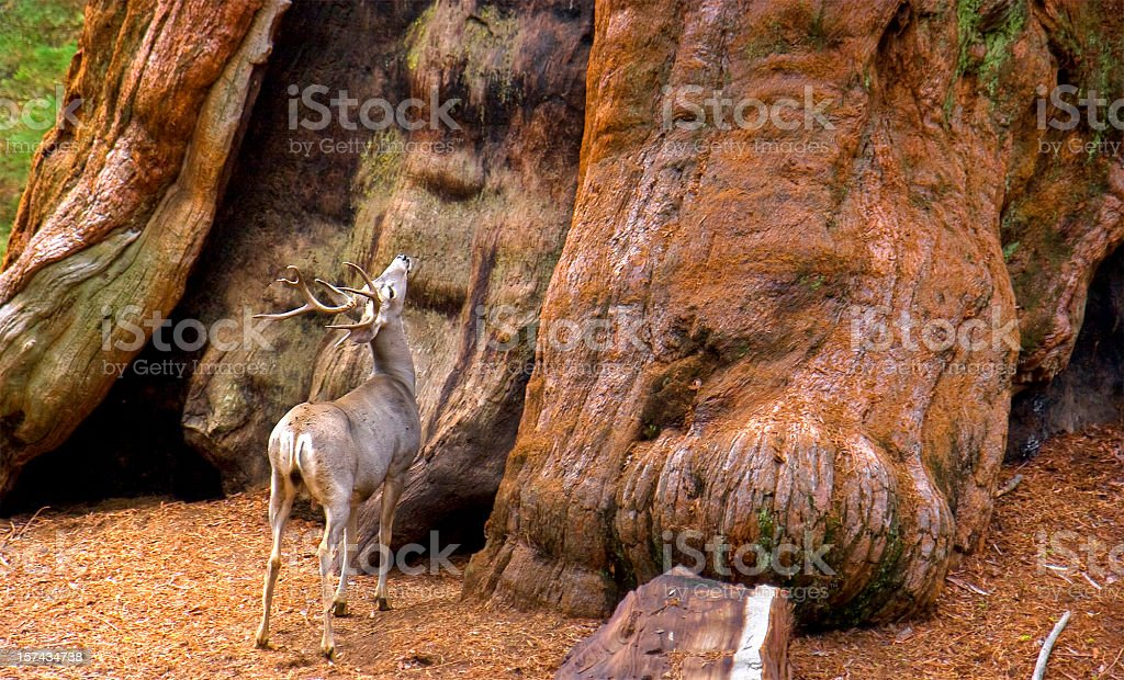 Amazed Deer stock photo