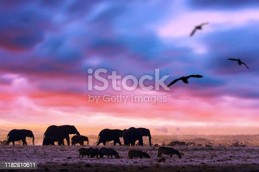182061384 istock photo Amazing african dramatic sunset with walking elephants in savannah. Artistic fantastic safari landscape in Masai Mara National Reserve, Kenya. Wide format 1182610511
