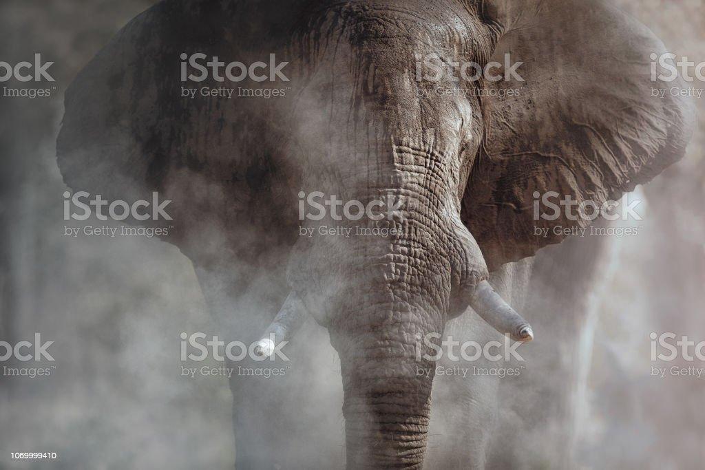 Amazing african elephant. stock photo