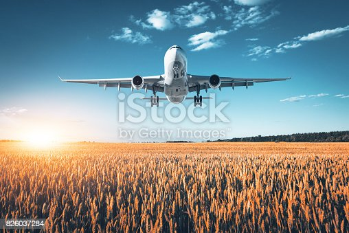 816320512 istock photo Amazing airplane. Landscape with big white passenger airplane is flying in the blue sky over wheat field at colorful sunset in summer. Passenger airplane is landing. Business trip. Commercial aircraft 826037284