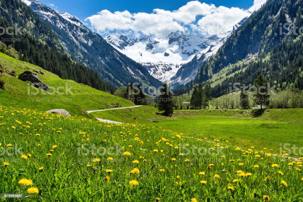 Amazing alpine spring summer landscape with green meadows flowers and snowy peak in the background. Austria, Tirol, Stillup valley. photo libre de droits