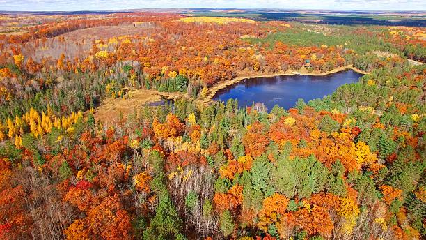 amazing autumn scenery, forests with lake, fall colors, aerial view - arbre à feuilles caduques photos et images de collection